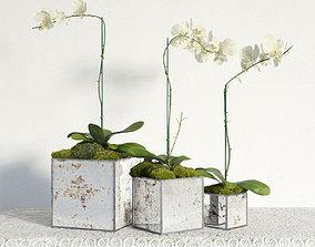 plant 28 am141 3D model