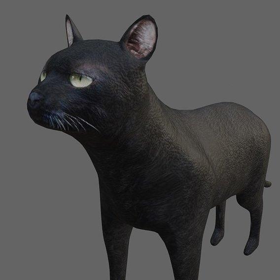 Simple Black Cat
