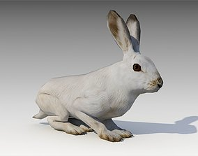 3D model Arctic hare