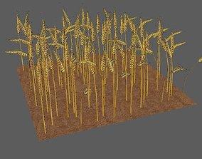 landscape wheat Field 3D