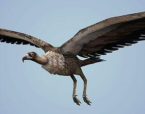3D model Fantasy Vulture