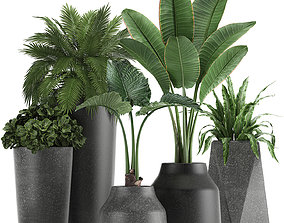 3D Collection of decorative plants in flowerpots 825