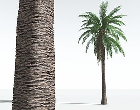 3D EVERYPlant Date Palm 10 --16 Models--