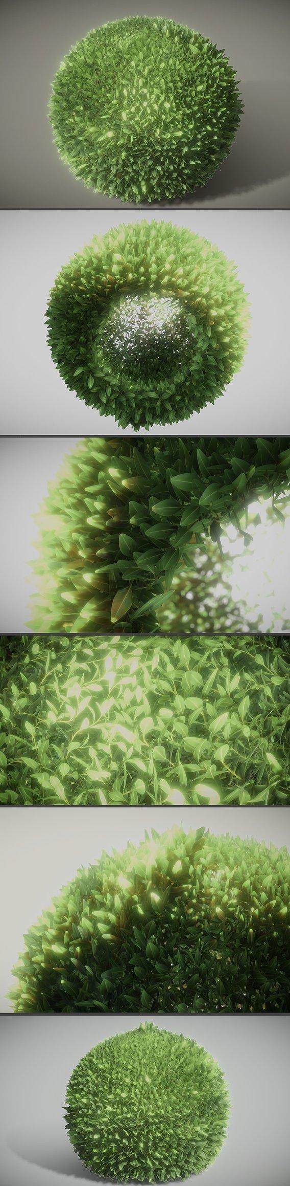 Boxwood Branch Test 3 (Blender-2.91 Eevee)