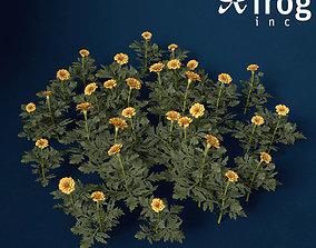 3D model XfrogPlants Marigold
