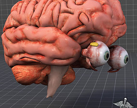seeing 3D Eye and Brain