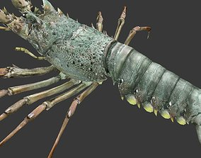 3D model Australian lobster