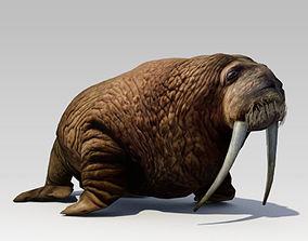 3D Walrus Animated