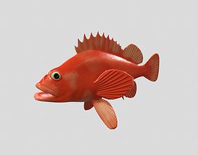 Sebastes aleutianus 3D model