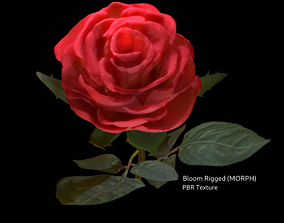 rigged Realistic 3D Rose Flower with Blooming Rig