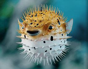 Pufferfish 3D model
