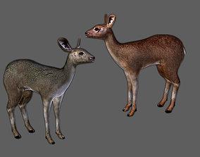 3D model Roe Deer - Fawn Cub Baby