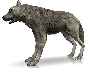3D model Detailed grey wolf