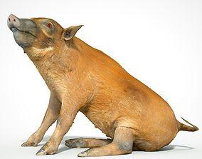 Red river Hog Pig 3D printable model