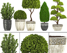 Collection of plants for the garden 3D