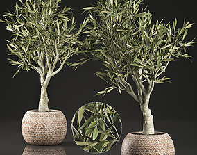 Olive tree for the interior in basket 644 3D model