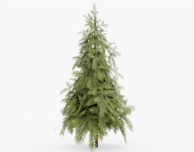Douglas Fir Tree 3D model