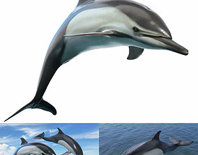 3D model 2020 Delphinus Dolphi Rigged Animated