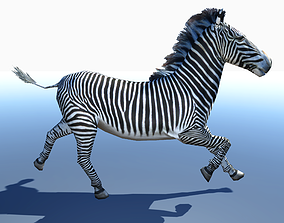 Zebra 3D Model animated VR / AR ready