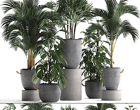Collection Exotic plants 408 3D