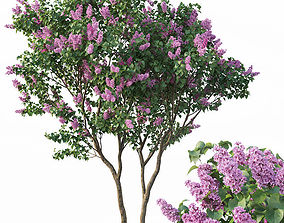 3D model Lilac Syringa vulgaris Nr3 - Tree