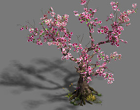 Forest - Peach Blossom Tree 21 3D model