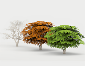 Maple Tree 02 G17 LOD 3D model