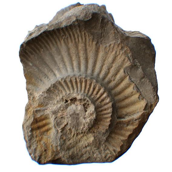Ammonite Stone