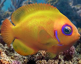 Lemon fish 3D model