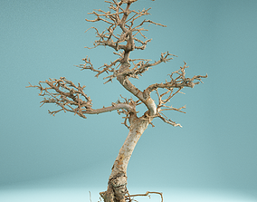 RAW SCAN Dead Bonsai Tree High Poly 09 3D
