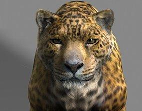 3D Leopard A