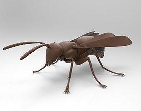 vray Bee model