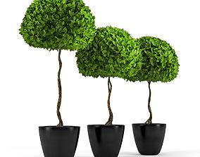 3D model Three plants