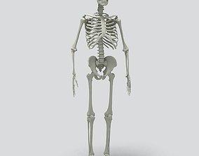 Human Skeleton spine 3D model