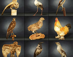 3D model 9 Birds Collection 2