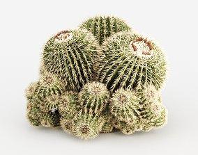 3D Echinocactus Grusonii