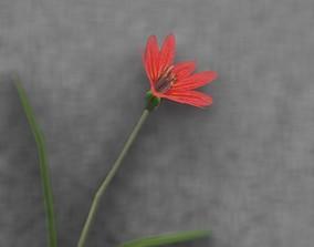 3D asset Red Flower - Verion 5 - Object 28