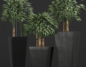 Plants Collection 10 3D model