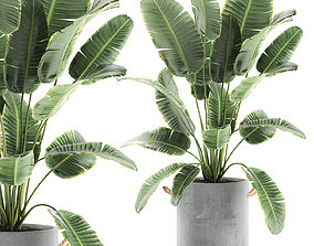 3D model Banana palms in flower pots for the interior 594