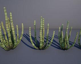 3D model Organ Pipe Cactus
