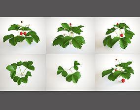 Strawberry Plant Set 3D model