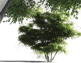 3D model EVERYPlant Japanese Maple 07