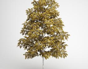 3D model CGAxis European White Birch 19