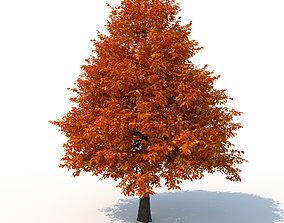 3D model Black Tupelo Tree No 2