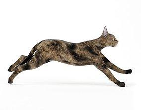 3D Black And Brown Cat