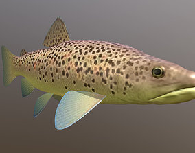 Brown trout Fish Koomja 3D model