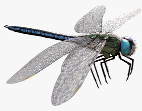 Anax imperator - Static 3D