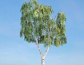 Green Weeping Betula Tree 3D