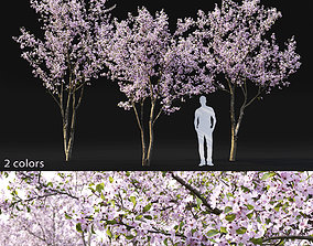 3D Cherry-tree Flowering 03