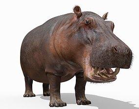 3D asset Super Hippo 8K - Animated